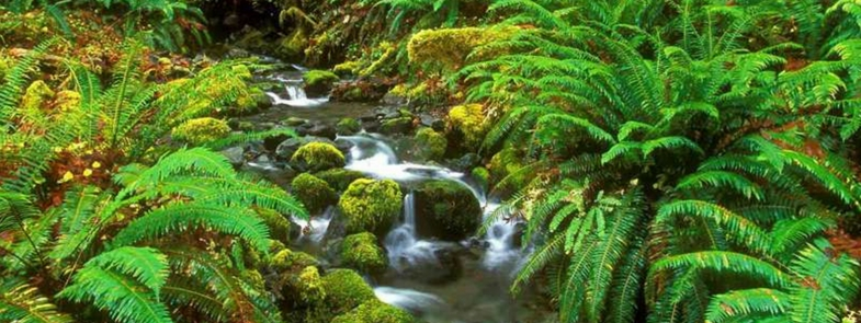 Medicijnen uit het regenwoud van Borneo Blog | Rowena Goes Ape