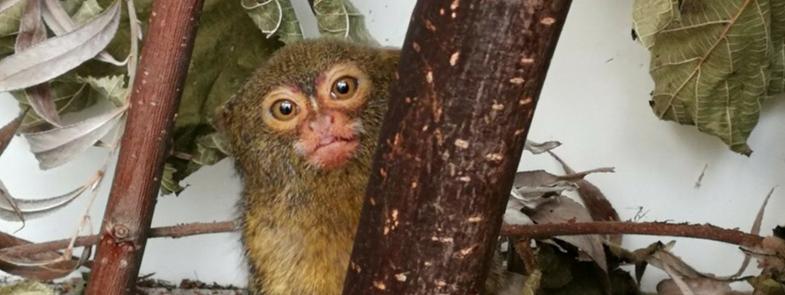 Exotische Zoogdiere AAP Blog Thumbnail 785x295 | Rowena Goes Ape