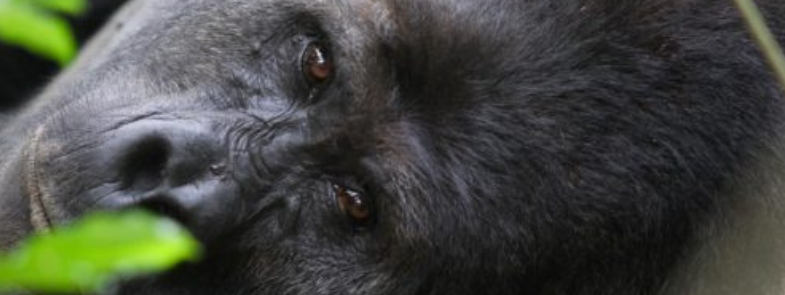 Filmtip Hope Dian Fossey Blog Thumbnail 785x295 | Rowena Goes Ape